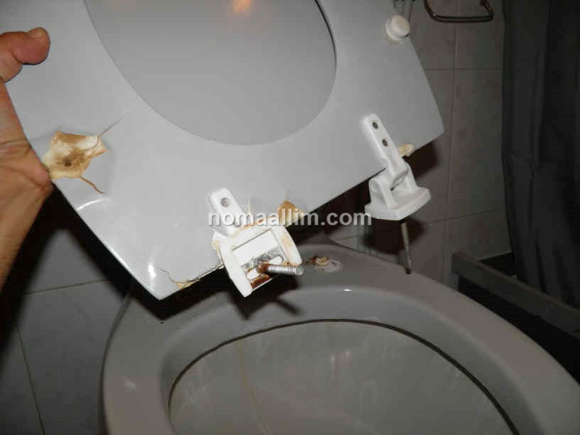 Incredible How To Replace The Toilet Seat Universal Toilet Seats Pdpeps Interior Chair Design Pdpepsorg